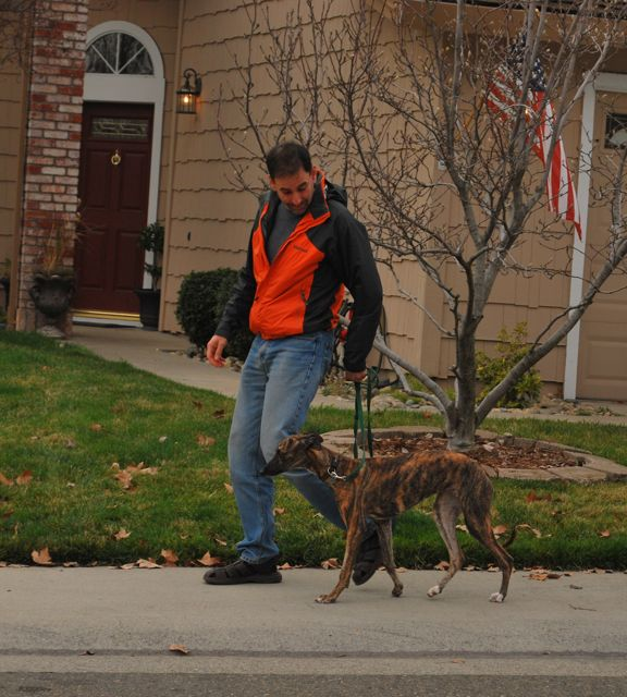 Jaimie Scott walking a whippet on a loose leash.