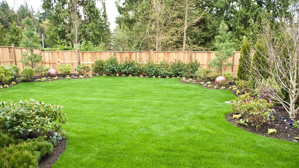 JaimieScottDogTraining-Yard-with-Grass272dpi